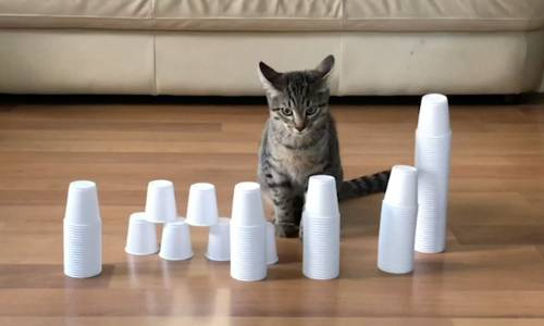 Cup Stacking for Kids