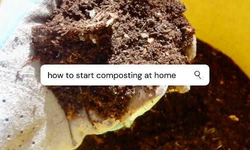 How to Start Composting at Home
